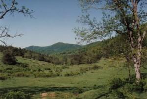 grave 1993 - Hinchman farm gravesite view